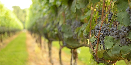Winery Tours tickets