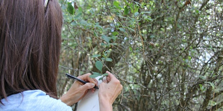 Saunter With a Naturalist in the Evening - June 15 tickets