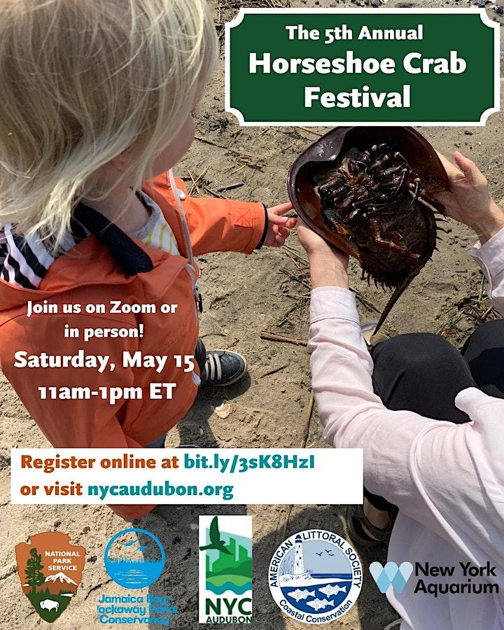 Horseshoe Crab Festival 2021: Session 3 image
