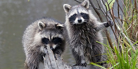 """The Importance of Prevention & Avoiding the """"DIY"""" of Wildlife Removal tickets"""