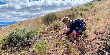 Gray Butte Wildflower Hike tickets