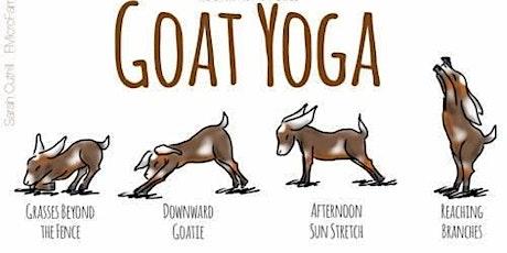 Goat Yoga on Thursday Nights tickets