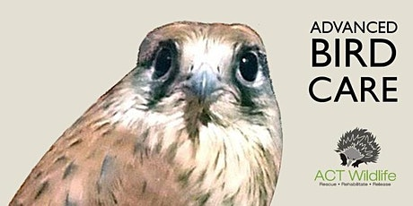 Advanced Bird Care tickets