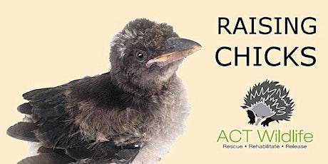 Raising Chicks tickets