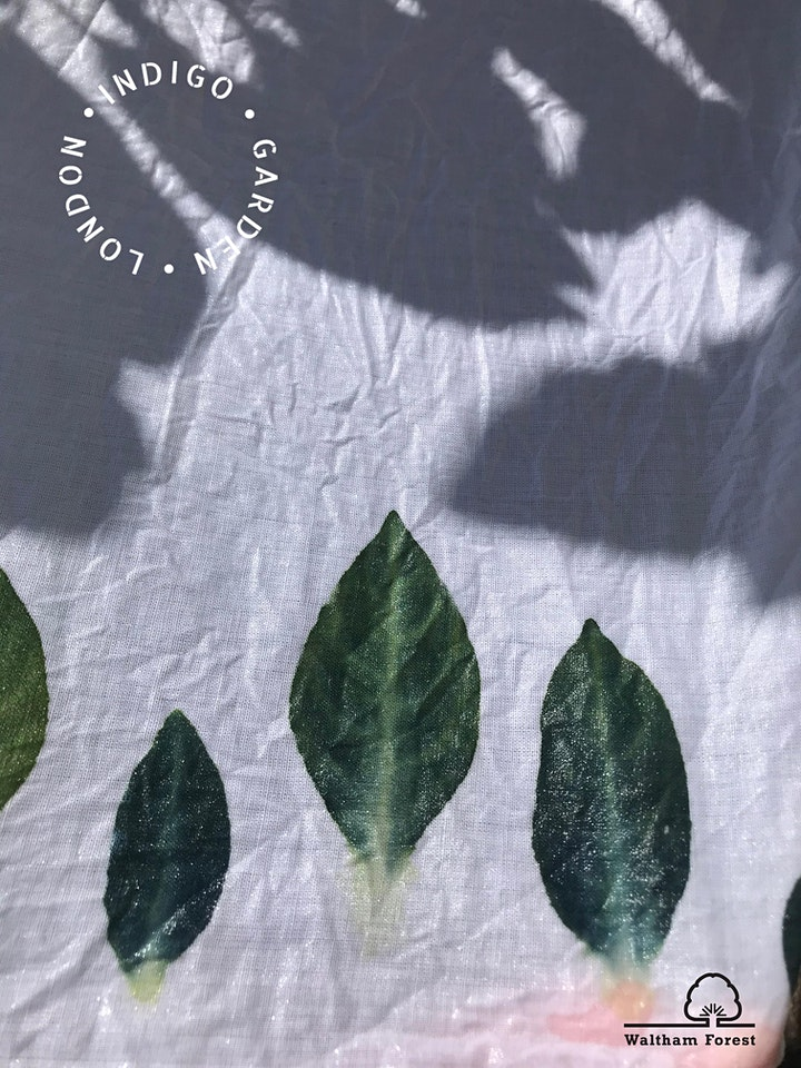 Sowing Crafts: Print & Pattern with Indigo plants image