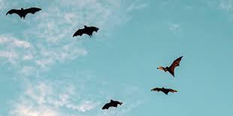 St George Park Bat Walk May 12th 2021 tickets