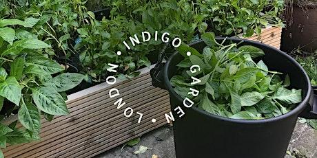 Sowing Crafts: Indigo Harvest tickets