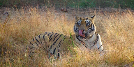 India Wildlife and Nature talk with Nitin Dhami and Anna tickets