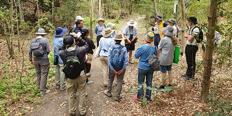 Brisbane's Big Butterfly Count: Ecology Walk Moggill Conservation Reserve - tickets