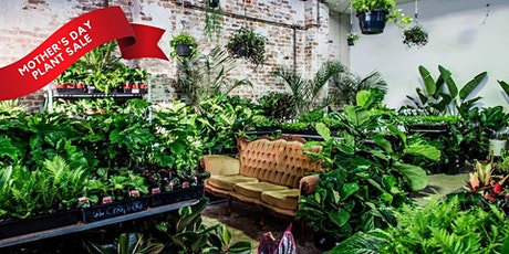 Sydney - Huge Indoor Plant Warehouse Sale - Mother's Day Plant Sale tickets