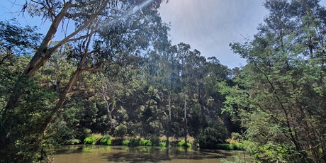 Sound Medicine Hike - Warrandyte tickets