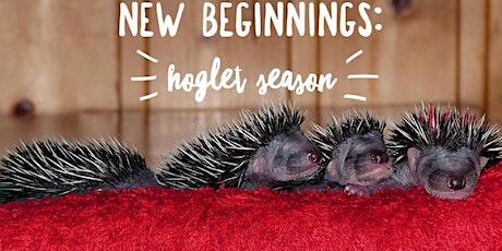 New Beginnings: Hoglet season Tickets
