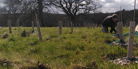 Tree Planting, Carbon and Climate - Online Talk tickets