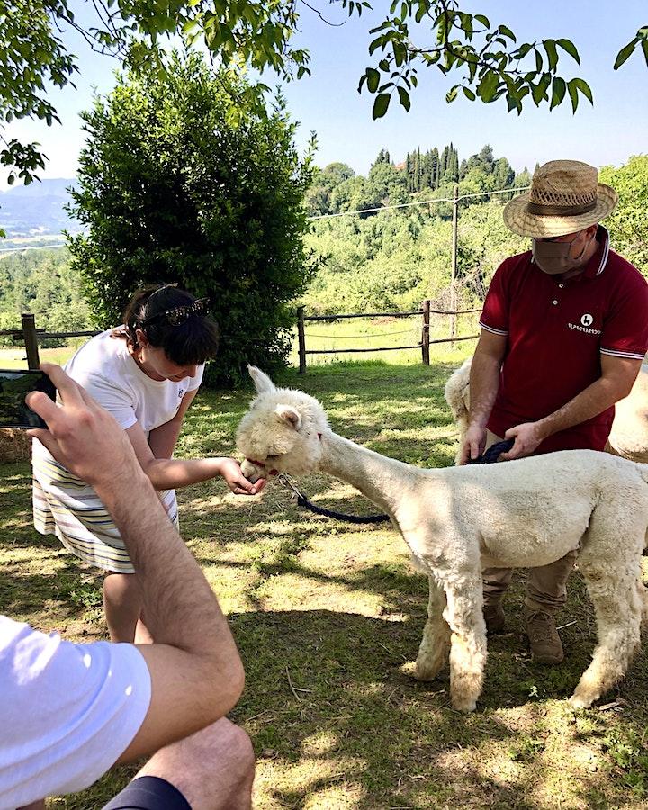 Immagine Meet my Alpacas - Open Day