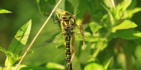 A beginners guide to dragonflies tickets