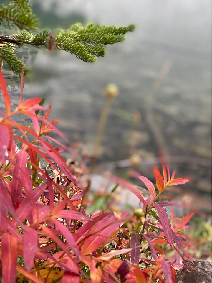 Fall Larch tree hike- Chester Lake (Intermediate) image