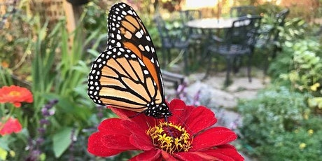 Gardening for Pollinators: Bees, Butterflies, and Beyond! tickets
