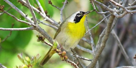 Biodiversity tour at Rumney Marsh tickets