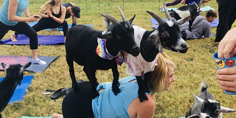 "Outdoor Goat Yoga Class-$25 Cash Only per person@door-Click ""About"" tickets"