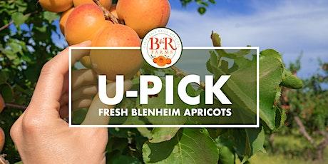 B & R Farms Apricot U-PICK 2021 tickets