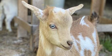 Goat Yoga Nashville- Capitol View (Downtown Nashville, North Gulch) tickets