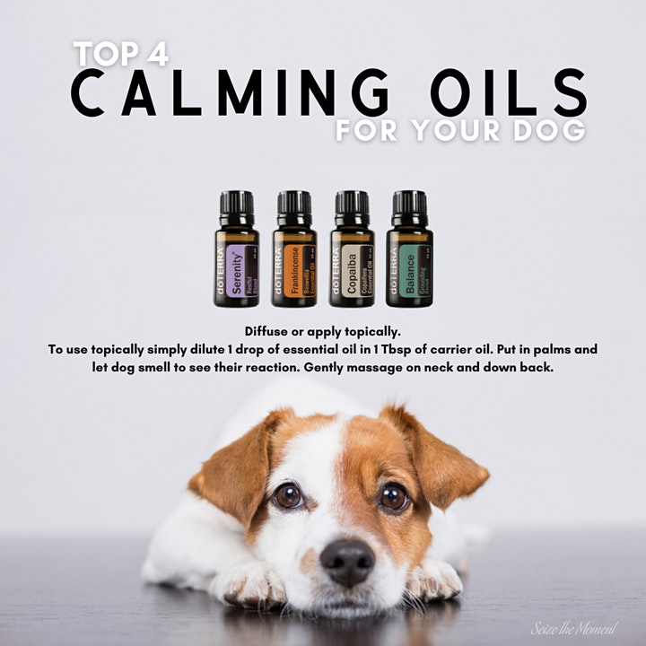 Pets and Safety with doTERRA Essential Oils image