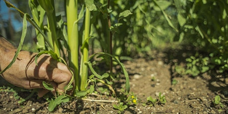 Garden Workshop and Food Stories Series: Intro to High Altitude Gardening tickets