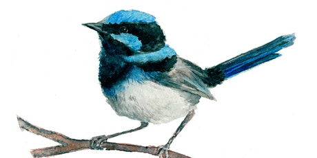 Painting Watercolour Native Birds (Gumeracha) tickets