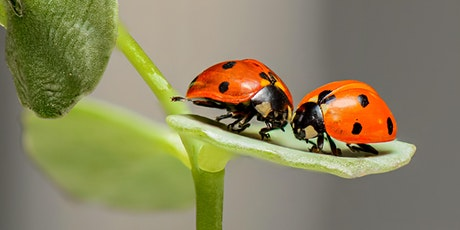 Little Entomologists: Beautiful Bugs and Interesting Insects tickets