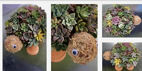 Succulent Turtle Workshop tickets