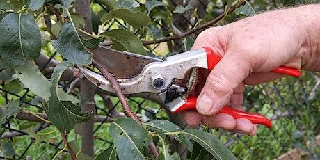 Edible Pruning Series - Workshop  3: Espalier tickets