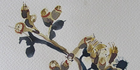 Watercolour and Mindfulness : Continuing Sunday June 27 Workshop 4 tickets