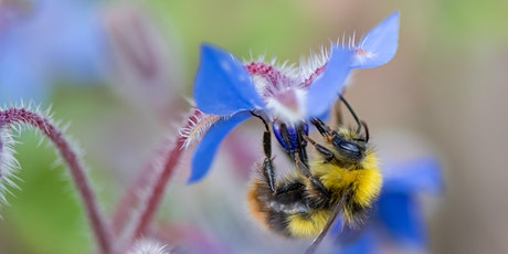 Live Webinar: Grow Don't Mow - How we can all help our pollinators tickets