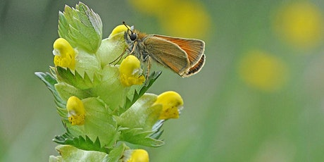 Plant for Pollinators and Rewild your Garden tickets