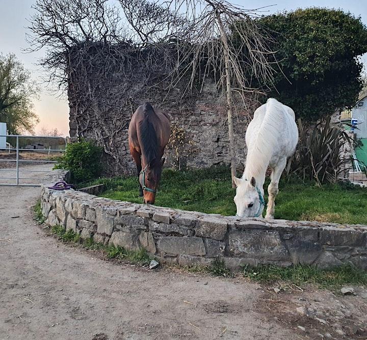 Farm walk image