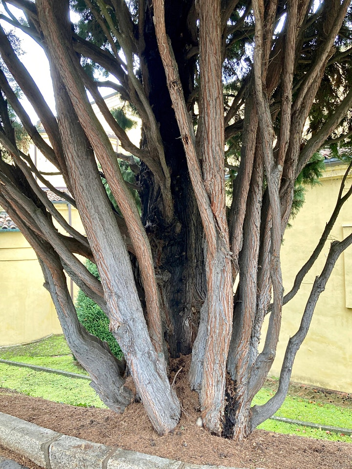 Immagine Diverdeinverde in Certosa | Verde ornamentale e decoro fitomorfo