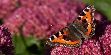 Get Cumbria Buzzing: Pollinator recording and transect training (online) tickets