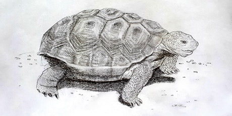 Get Drawing: Tortoises Workshop tickets