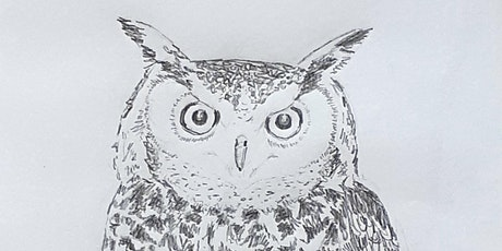 Get Drawing: Owls Workshop tickets