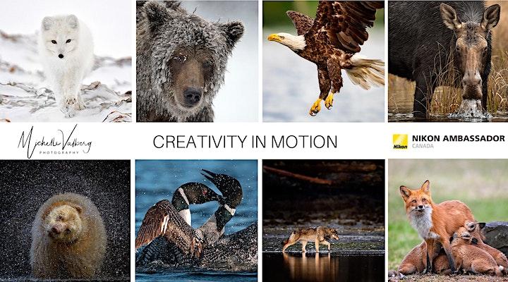 Pushing the Boundaries of Wildlife Photography image