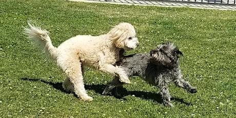 Tiny Paws Fresno Small Dog Social 5/15/21 tickets