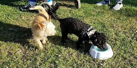 Tiny Paws Fresno Small Dog Social 5/22/21 tickets