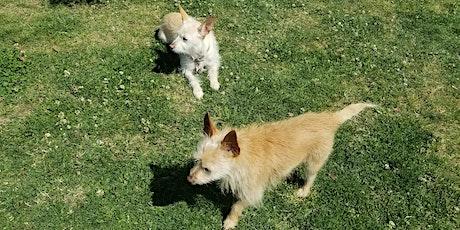 Tiny Paws Fresno Small Dog Social 5/29/21 tickets