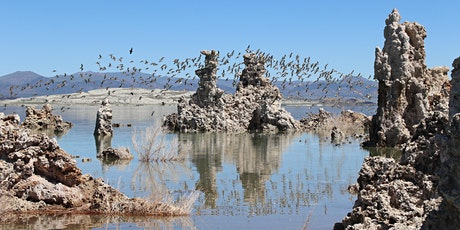 2021 Virtual Mono Basin Bird Chautauqua tickets