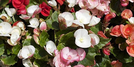 Roger's Featured Plant of the Week with Sarah Smith tickets