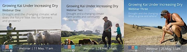 Growing Kai Under Increasing Dry Deep South Challenge