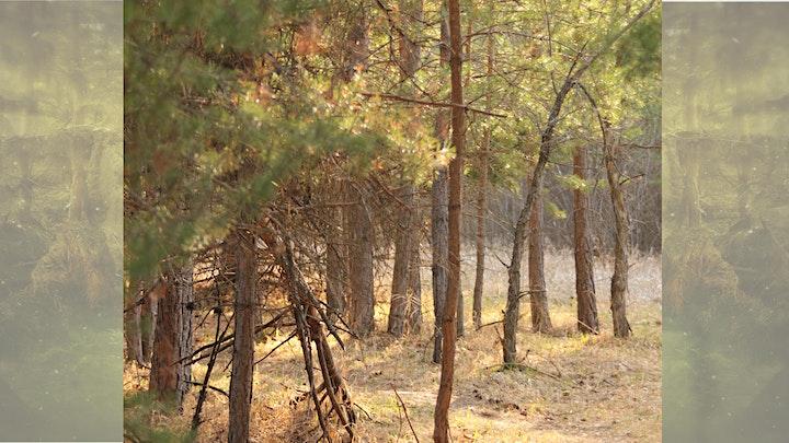 Extraordinary legacy tour of Richard St. Barbe Baker Afforestation Area image