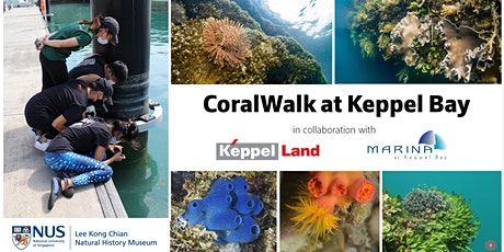 (Mandarin 中文) CoralWalk at Keppel Bay tickets
