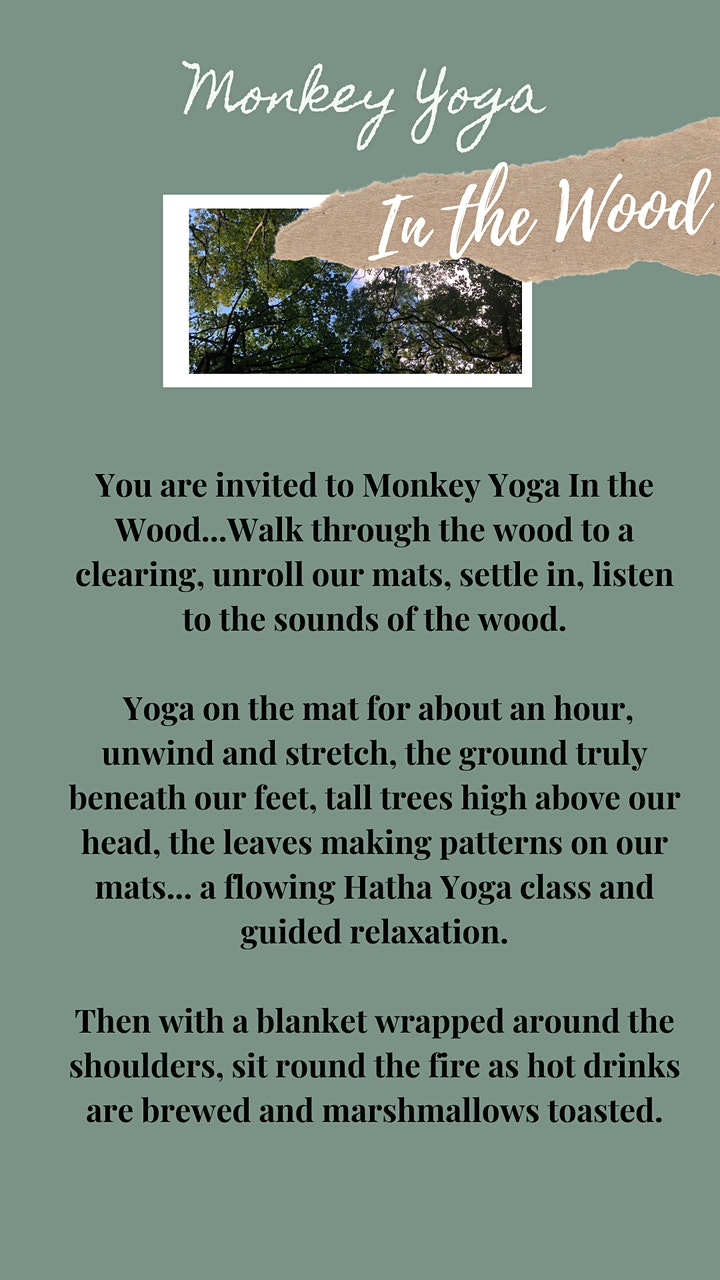 Monkey Yoga In the Wood image