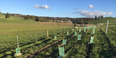 Tree Planting Day - Hoddles Creek tickets